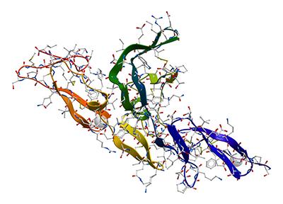 fibroblast2